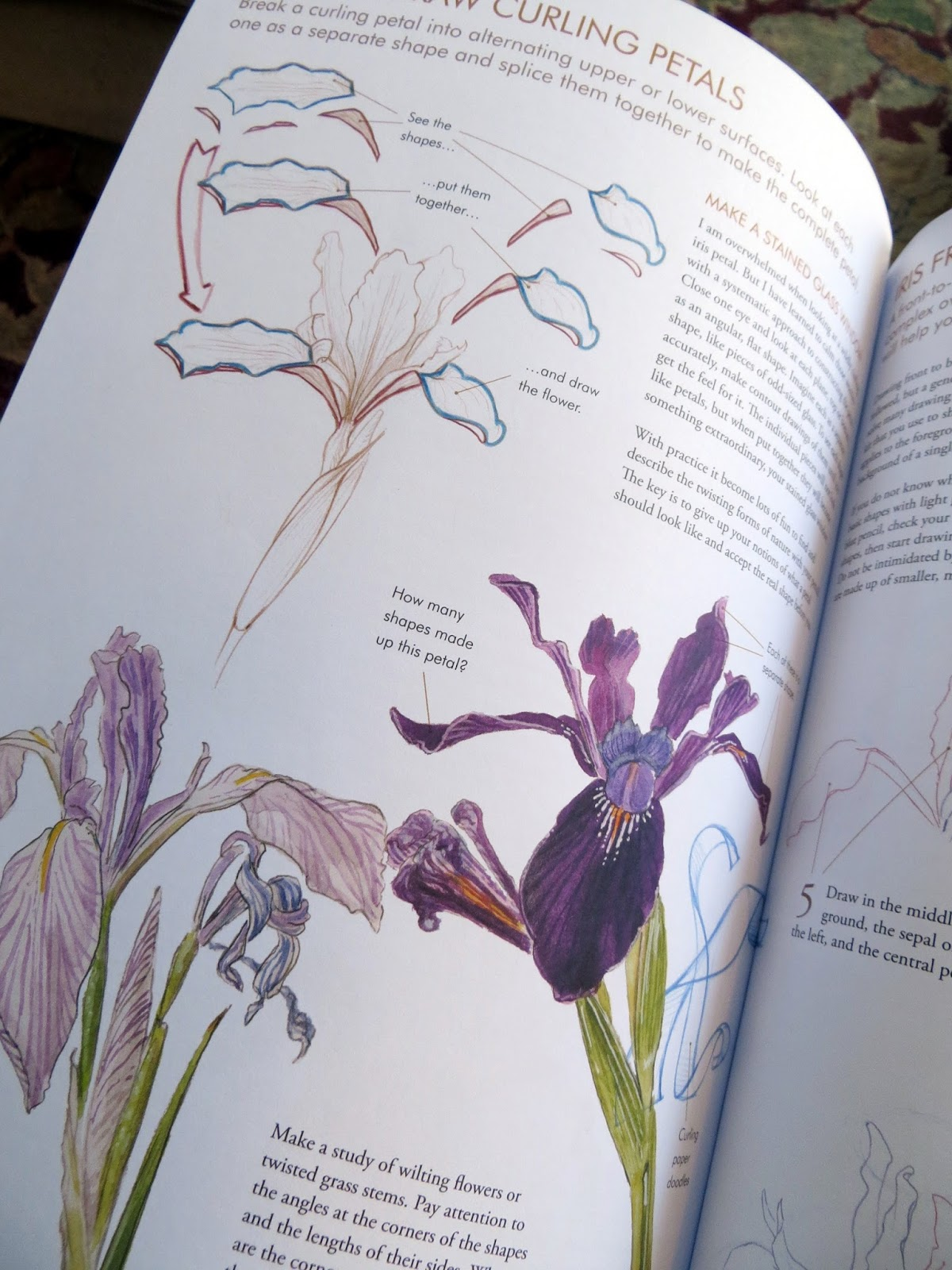 Sketching In Nature  John Muir Laws U0026 39  Laws Guide To Nature