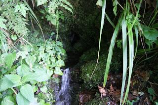 Aus einem Felsspalt entspringt die ewige Quelle, umgeben von Moos