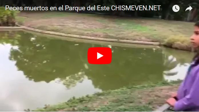 Murieron todos los peces del Parque del Este por falta de limpieza