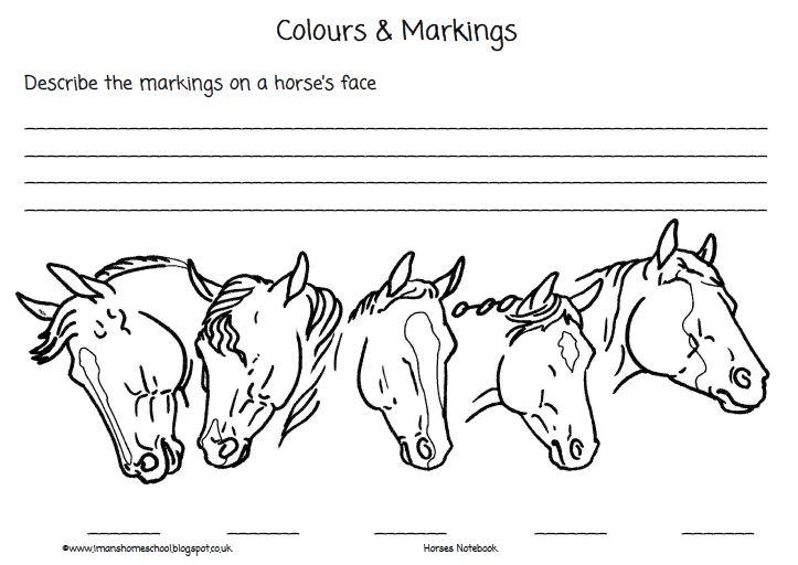 Horse Face Markings Worksheet Www Imagenesmy Com