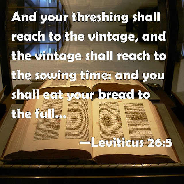"""Your threshing season will overlap with the grape harvest, and your grape harvest will overlap with the season of planting grain. You will eat your fill and live securely in your own land."" (Leviticus 26:5, NLT)"