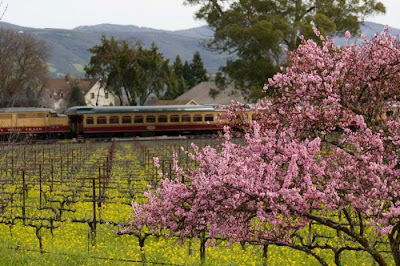 Footballer David Beckham In 2008 Presented A Gift To His Wife For Her 34th Birthday Vineyard Napa Valley