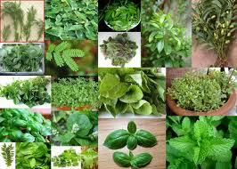 Βότανα, Ελληνική κουζίνα, Πρακτικά, Συμβουλές, Υγεία, Φυσικές Συνταγές, θεραπείες,
