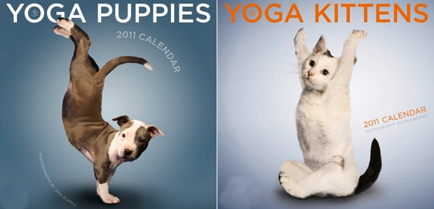 Dan Borris | Professional photographer | Yoga Dogs and Kittens