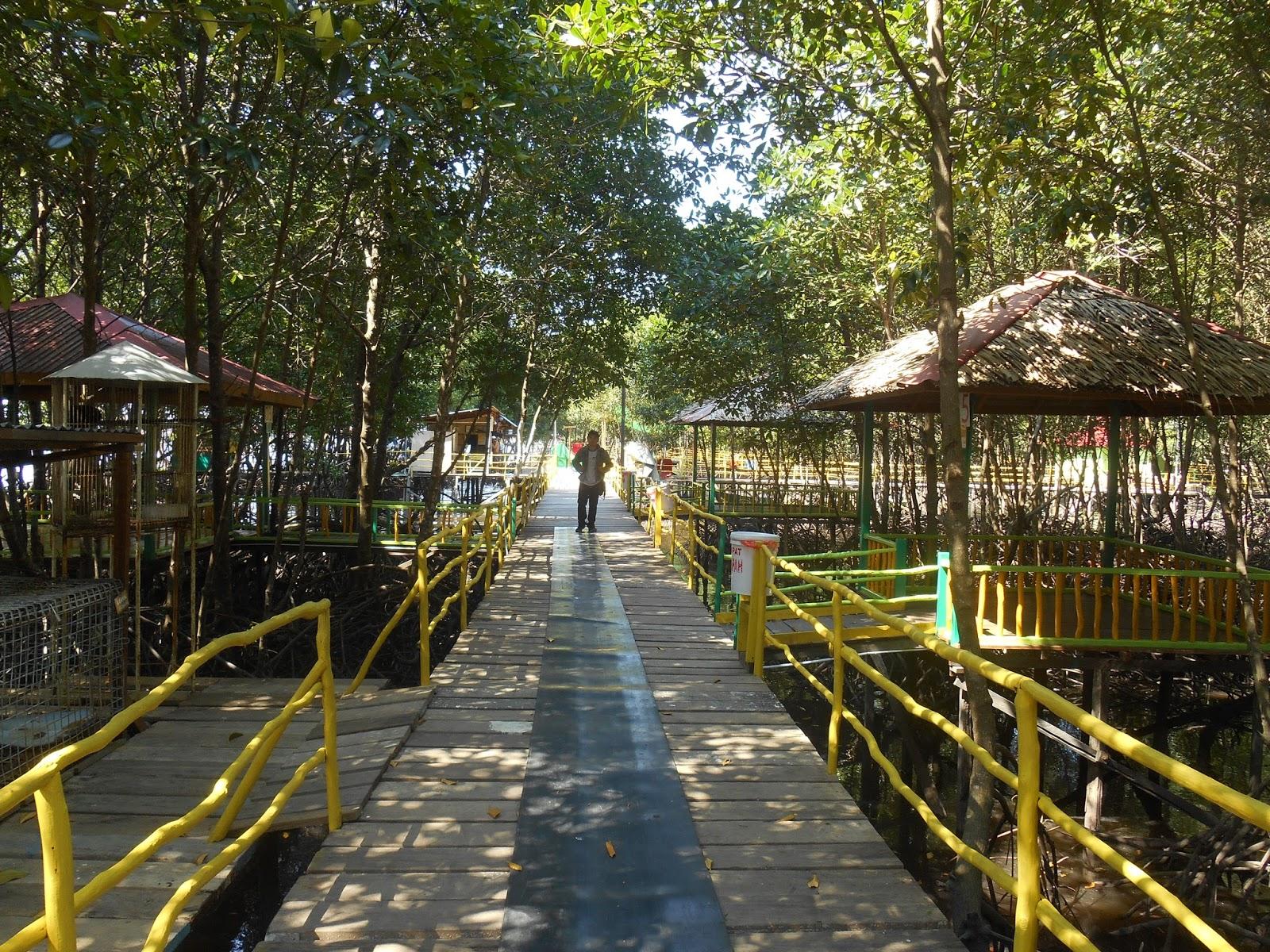 Taman Wisata Mangrove Bsd Bontang Alternatif Tempat Liburan Bagi