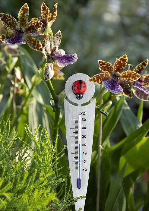 Florile de ciclamen si termometrul de exterior