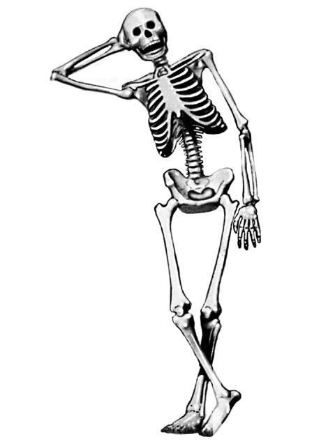 Functions Of Skeleton Functions Of Skeleton