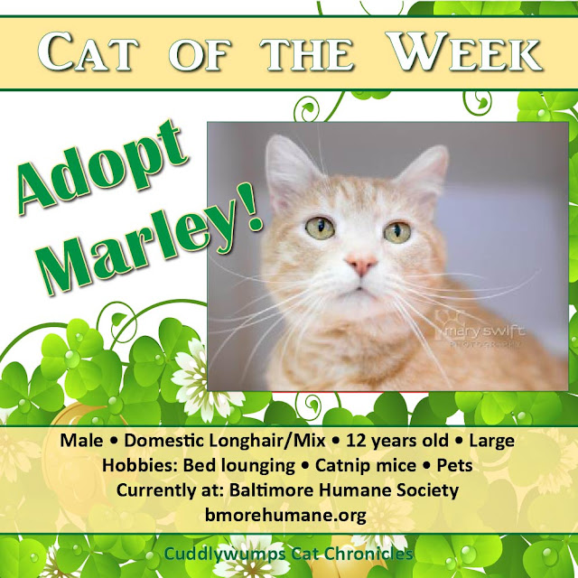 Cat of the Week: Marley, Baltimore Humane Society