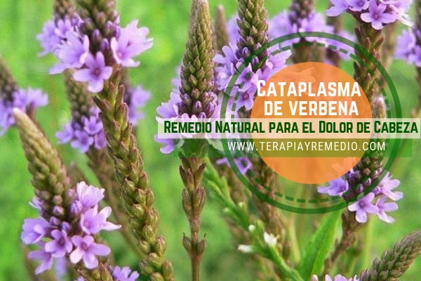 Remedio natural con verebena officcinalis para el dolor de cabeza