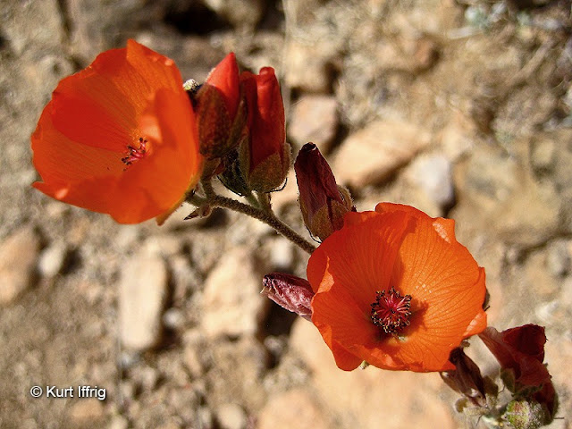 Despite the hostile desert terrain, there's an abundance of life near Contact Mine.