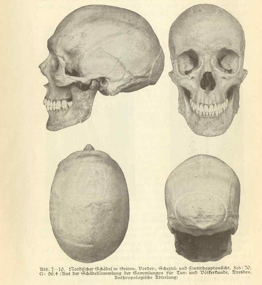 своем череп арийский картинка путешествия собирается довольно