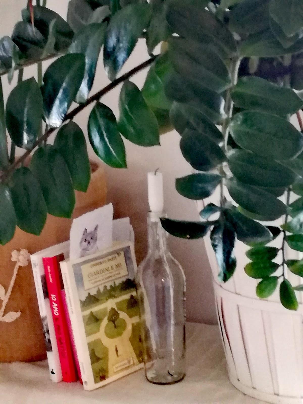 Piante Da Appartamento Ambiente Buio foglie e fusa: zamioculcas! una pianta da dimenticare!
