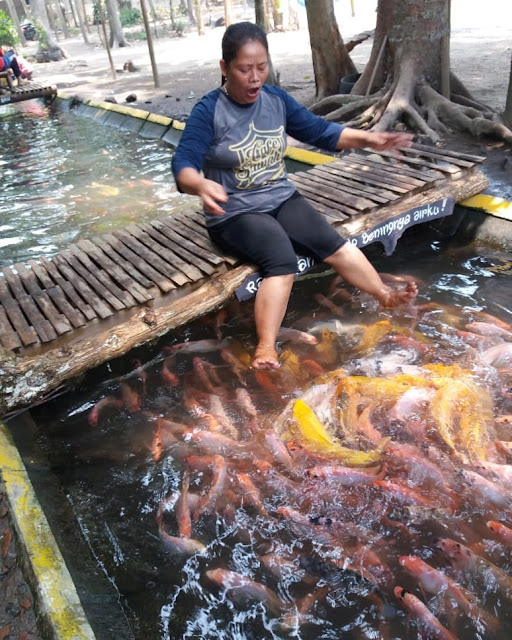 Sensasi mandi ditemani Sejuta ikan di desa jambu kediri