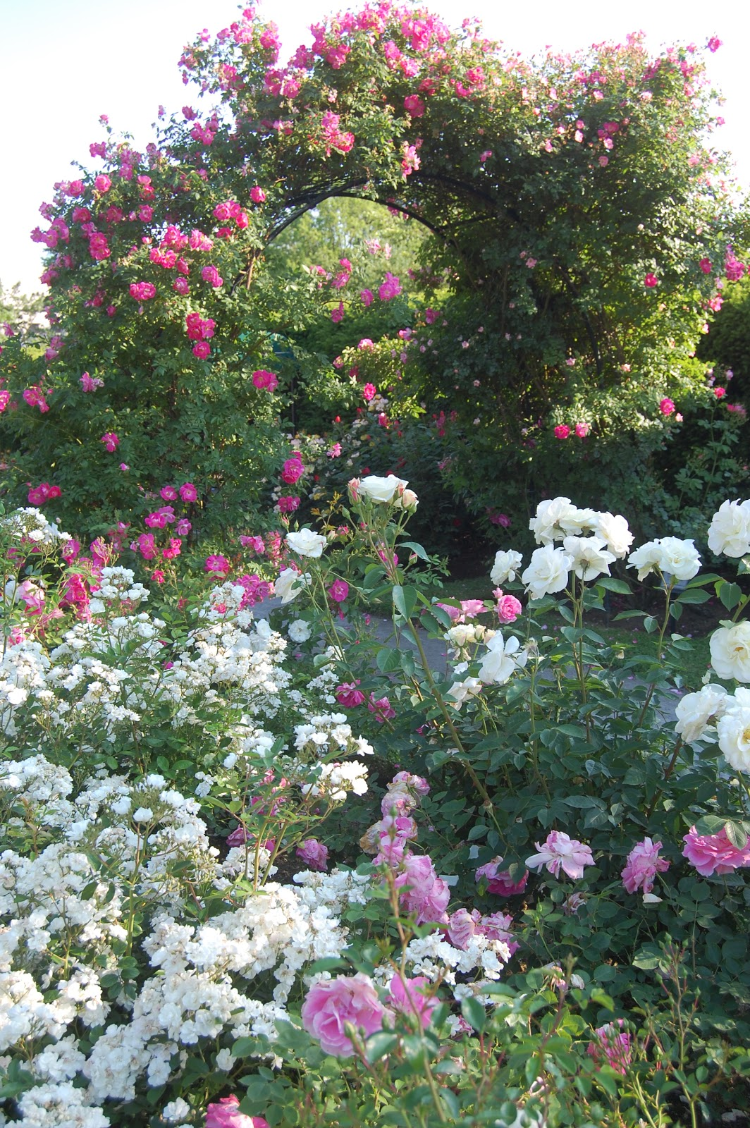Full Garden In Backyard: Sprouts: Boston's Kelleher Rose Garden In Full Bloom Part 2