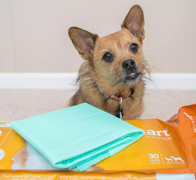 Jada and WizSmart Pet Pads