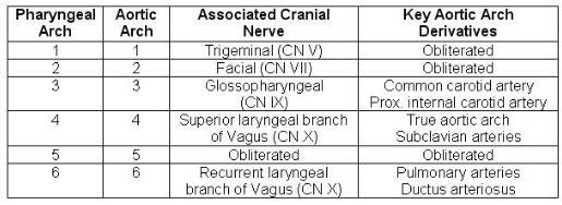 MBBS Medicine (Humanity First): Pharyngeal arches