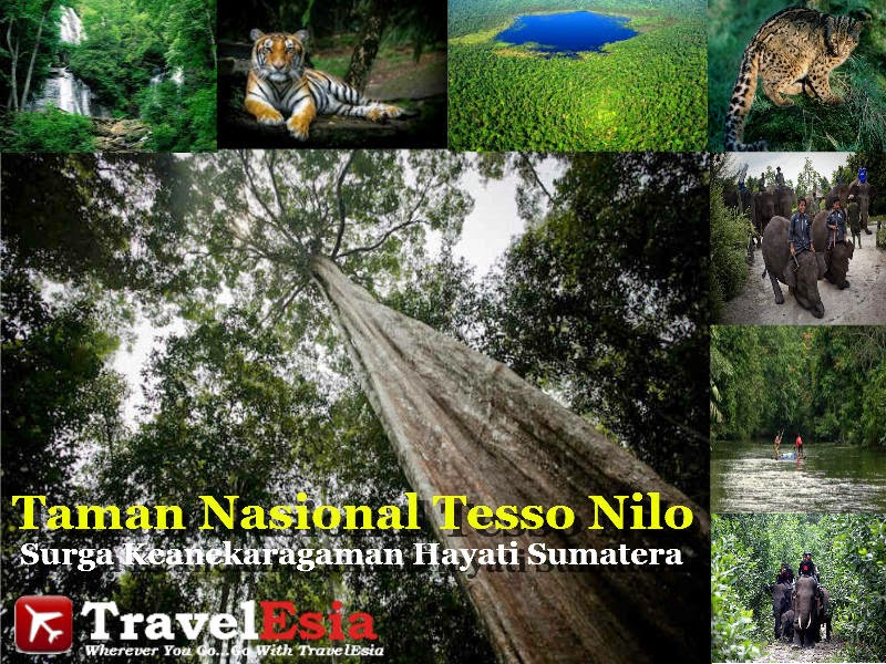 Taman Nasional Tesso Nilo