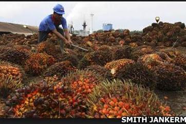 Lowongan Kerja Riau : Perusahaan Perkebunan Dan Pabrik Pengolahan Kelapa Sawit September 2017