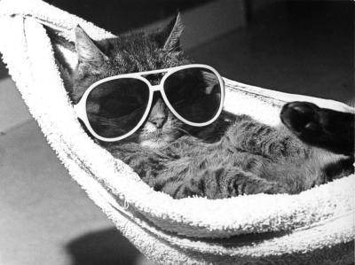 http://3.bp.blogspot.com/-hUgBw0ML8Ks/Tim1Yqh51oI/AAAAAAAAAQ0/fuYOiXVBoek/s1600/cat-with-sunglasses-lying-in-a-hammock-r-diger-poborsky-200540.jpg