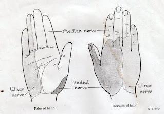 saraf di jari dan telapak tangan manusia ada 3 jenis