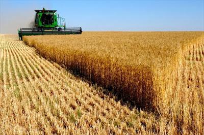 campo de cultivo de cereales