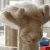Her Yerde Uyuyabilen 15 Komik Kedi