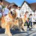25ª Cãominhada ocorre com 1.160 cães inscritos e os donos e seus pets cumpriram um percurso de 1,5 km.