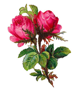 flower rose image digital clipart download botanical illustration
