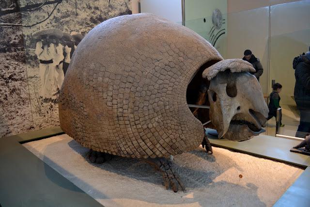 Гліподонтові. Американський музей природознавства, Нью-Йорк(American Museum of Natural History, NYC)