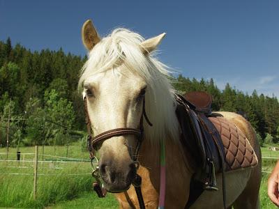 konie, kuce, jazda konna, nauka jazdy konnej