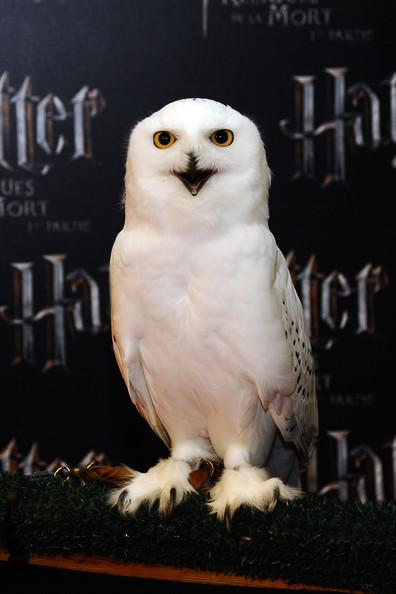 ( http://harrypotter.wikia.com/wiki/Hedwig )