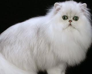 Nama Kucing Jantan Serta Betina Yang Terkenal