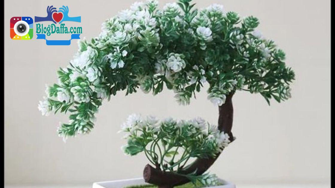 Bonsai pohon kaca piring