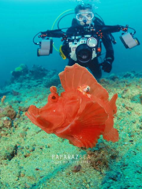 Scuba Diving, Underwater Photography, Diving, Philippines, Underwater Travel