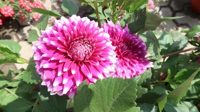 lovely-flowers-wallpaper