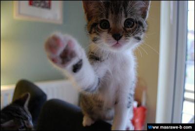 صور صور قطط كيوت 2020 خلفيات قطط جميلة جدا cats28.png