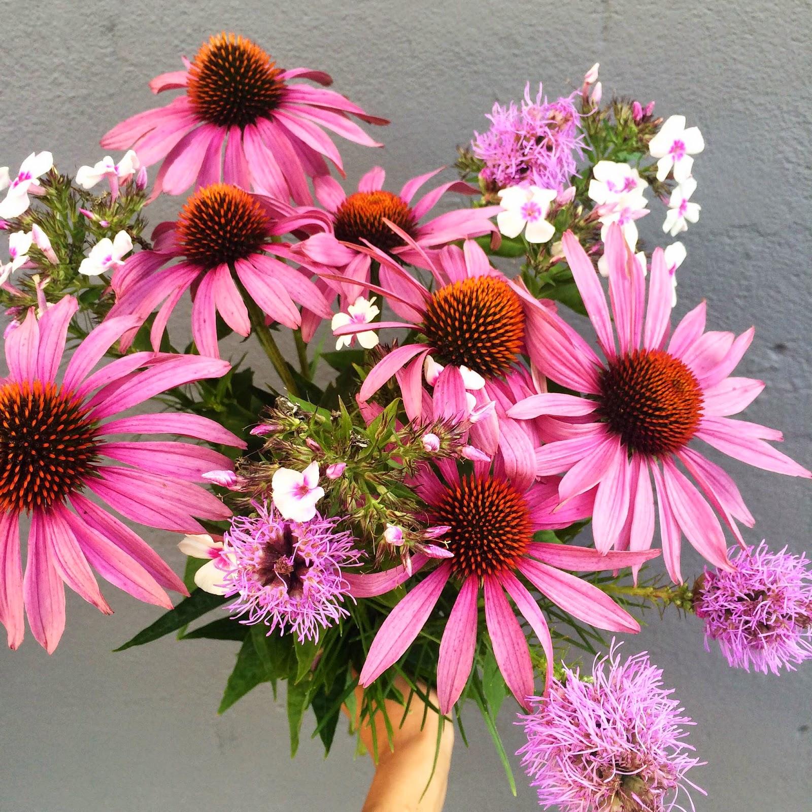 pink garden rustic flowers