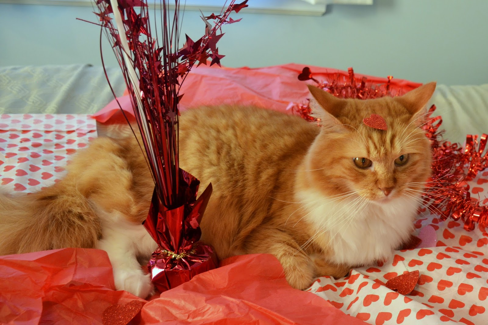 Lostvestige: Cat Photos Friday #97- Valentine's Day Outtakes