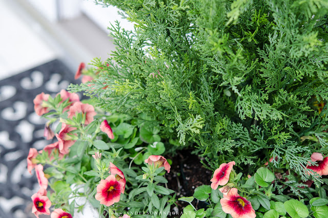 Faux shrubs and bushes are a great alternative to the real thing when planted in pots and containers for your porch.  Learn where to find these plants and how to make them look as real as possible to easily enhance your home's curb appeal. #curbappeal #outside #porch #entryway #andersonandgrant