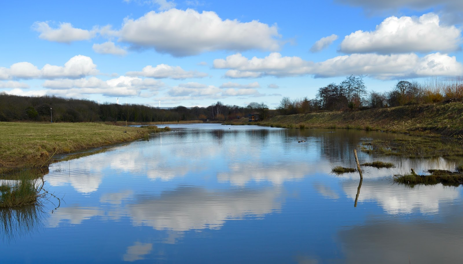 WWT Washington Wetland Centre | An Accessible North East Day Out for the Whole Family - reflection in water from bird hide