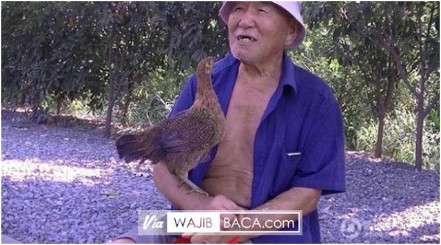 Unik, Kisah Pak Tua Asal Cina Yang Bersahabat Dengan Ayam