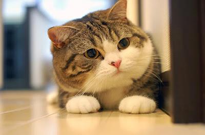 Những lý do bạn nên nuôi một chú mèo