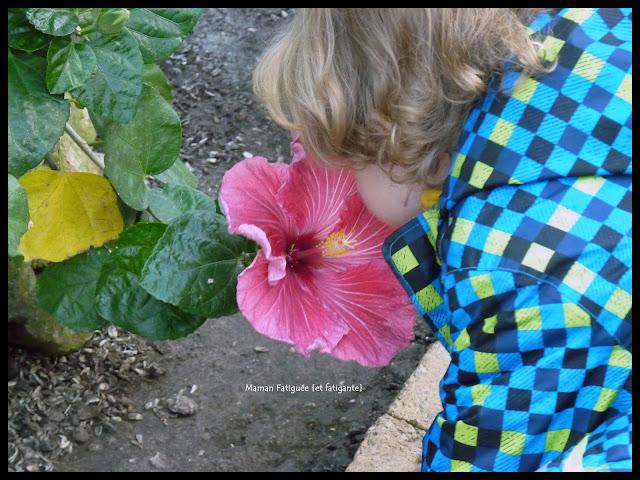 parc phoenix enfant