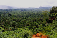The forest of Gbarpolu County. Shot outside Bopolu, Liberia. (Photo Credit: tlupic, Creative Commons License)  Click to Enlarge.
