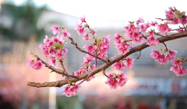 Resultado de imagem para fotos de flores no inverno