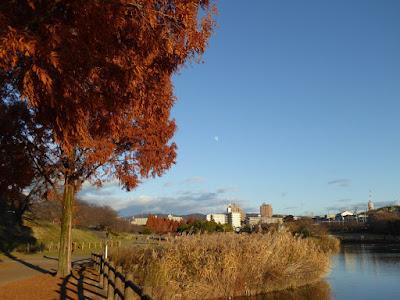 打上川治水緑地・メタセコイアの紅葉と月