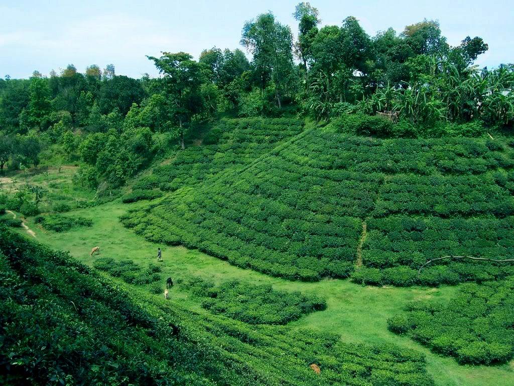 Wallpaper: Natural Beauty Of Bangladesh