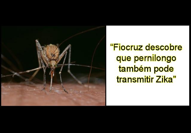 Pernilongos comuns também podem transmitir zika.