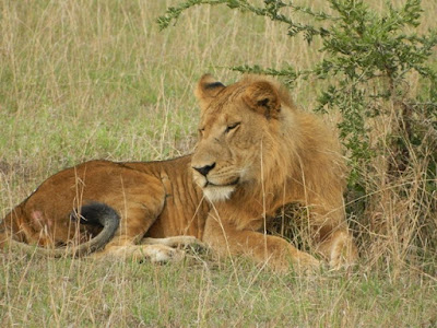 3 Day Queen Elizabeth National Park in Uganda
