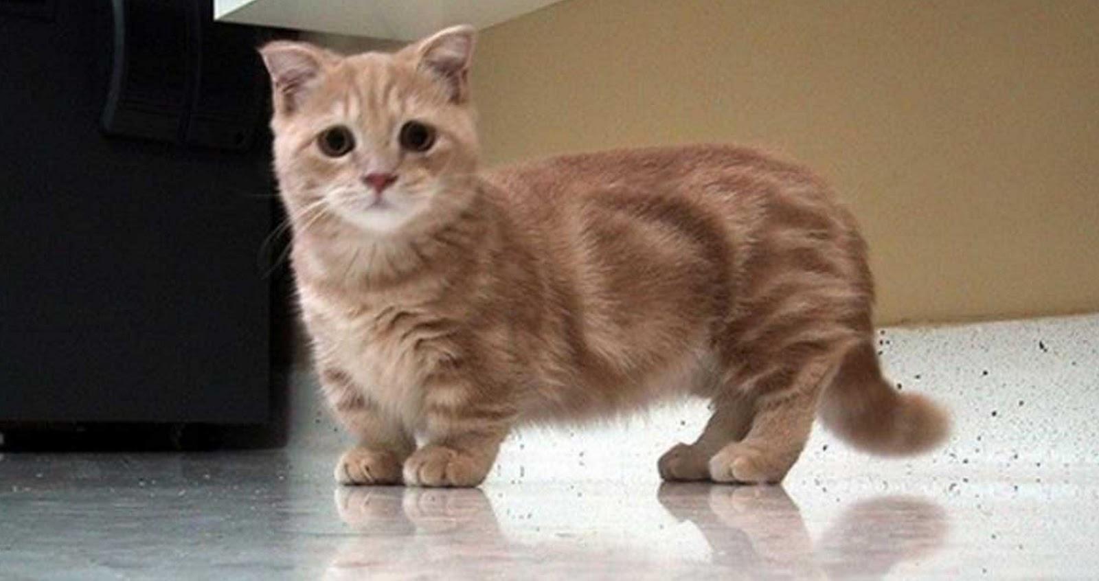 5 cutest cat breeds